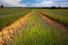 Het gebied van de lavendel Stock Afbeelding