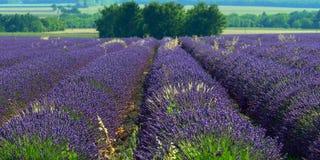 Het gebied van de lavendel Royalty-vrije Stock Foto