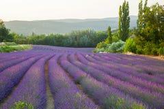 Het gebied van de lavendel Stock Afbeeldingen