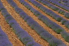 Het gebied van de lavendel, de Provence, Frankrijk Royalty-vrije Stock Foto's