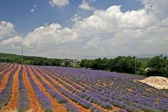 Het gebied van de lavendel, de Provence, Frankrijk Royalty-vrije Stock Afbeelding