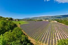 Het gebied van de lavendel in de Provence, Frankrijk Royalty-vrije Stock Foto