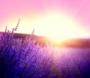 Het gebied van de lavendel in de Provence, Frankrijk Bloeiende Lavendel royalty-vrije stock afbeelding