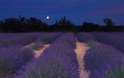 Het gebied van de lavendel in de Provence onder het maanlicht Stock Foto's