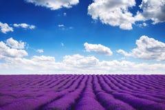 Het gebied van de lavendel in de Provence stock afbeeldingen