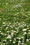 Het gebied van de lente Stock Foto