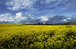 Het gebied van de lente Royalty-vrije Stock Afbeeldingen