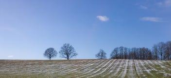 Het Gebied van de lente Royalty-vrije Stock Afbeelding