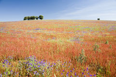 Het gebied van de lente - Alentejo, Portugal stock foto's