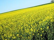 Het Gebied van de lente met een Boom Royalty-vrije Stock Fotografie