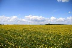 Het gebied van de lente met gele bloemen Stock Afbeeldingen