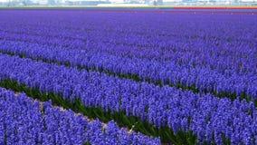 Het gebied van de de lentebloem stock footage