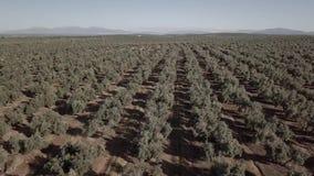 Het gebied van de luchtmening van olijfbomen dichtbij Jaen stock videobeelden