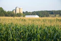 Het gebied van de maïs Royalty-vrije Stock Afbeelding
