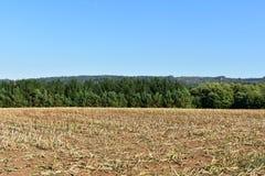 Het gebied van de maïscultuur na de oogst en bomen met blauwe hemel Het ploegen van het gebied stock foto's