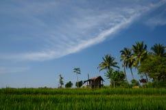 Het gebied van de padie Stock Foto's