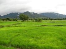 Het gebied van de padie stock afbeelding