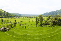 Het Gebied van de padie, Amed, Oost-Bali, Indonesië Royalty-vrije Stock Afbeeldingen