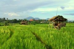 Het gebied van de padie in Bali Stock Foto