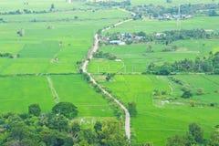 Het gebied van de padie, de mening van het vogeloog van platteland Stock Afbeeldingen