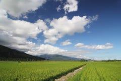 Het Gebied van de padie met Blauwe Hemel 02 Royalty-vrije Stock Afbeelding