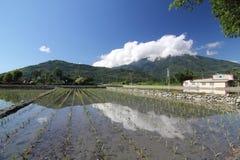 Het Gebied van de padie met Blauwe Hemel 03 Stock Foto's