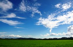 Het gebied van de padie met blauwe hemel Royalty-vrije Stock Fotografie