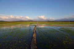 Het Gebied van de padie met Blauwe Hemel Royalty-vrije Stock Foto's