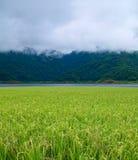 Het gebied van de padie met nevelige berg Royalty-vrije Stock Afbeelding