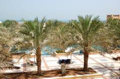 Het gebied van de recreatie van luxehotel met dadelpalm Royalty-vrije Stock Foto's