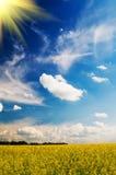 Het gebied van de sereniteit van tarwe en zon. Stock Foto's