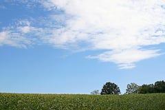 Het gebied van de sojaboon en blauwe hemel Royalty-vrije Stock Foto