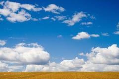 Het gebied van de tarwe. Stock Afbeeldingen