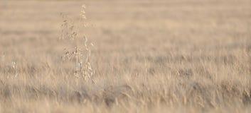 Het gebied van de tarwe stock fotografie