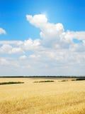 Het gebied van de tarwe Royalty-vrije Stock Foto