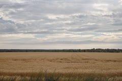 Het gebied van de tarwe Royalty-vrije Stock Afbeeldingen