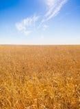 Het gebied van de tarwe Royalty-vrije Stock Foto's