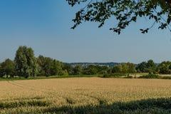 Het gebied van de tarwe in de zomer Stock Foto