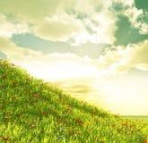 Het gebied van de tarwe met bloemen Royalty-vrije Stock Afbeelding