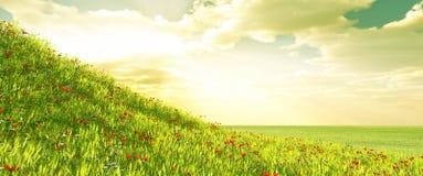 Het gebied van de tarwe met bloemen Stock Afbeeldingen