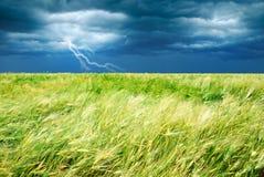 Het gebied van de tarwe met stormachtige hemel en bliksem Stock Fotografie