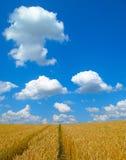 Het gebied van de tarwe met weg stock foto's