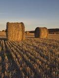 Het gebied van de tarwe na oogst stock foto