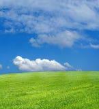 Het gebied van de tarwe over blauwe hemel royalty-vrije stock afbeelding