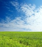 Het gebied van de tarwe over blauwe hemel royalty-vrije stock afbeeldingen