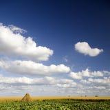 Het gebied van de tarwe in platteland Royalty-vrije Stock Foto