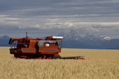 Het Gebied van de Tarwe van Idaho Royalty-vrije Stock Foto