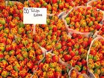 Het gebied van de tulp #4 stock fotografie