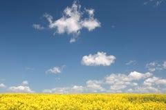 Het gebied van de verkrachting en blauwe hemel. de lente Stock Foto