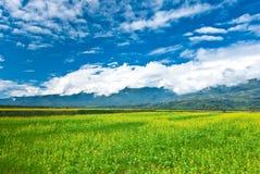 het gebied van de verkrachtingsbloem met mooie cloudscape Stock Foto